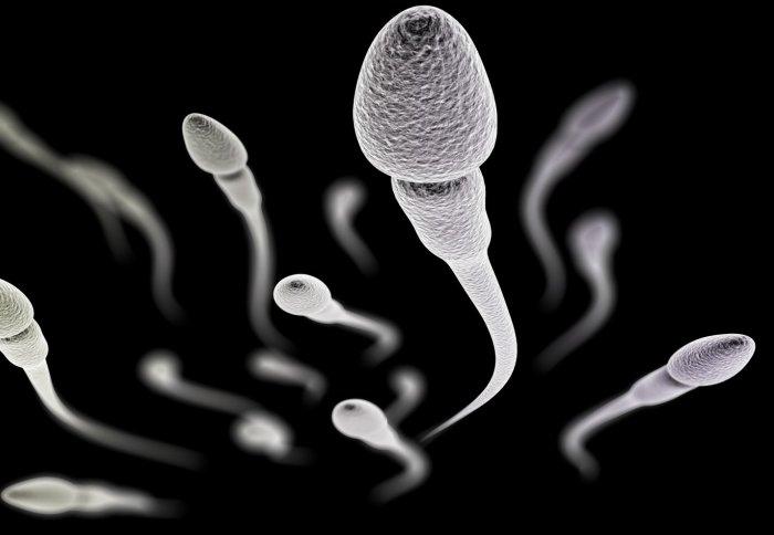 تعداد اسپرم طبیعی
